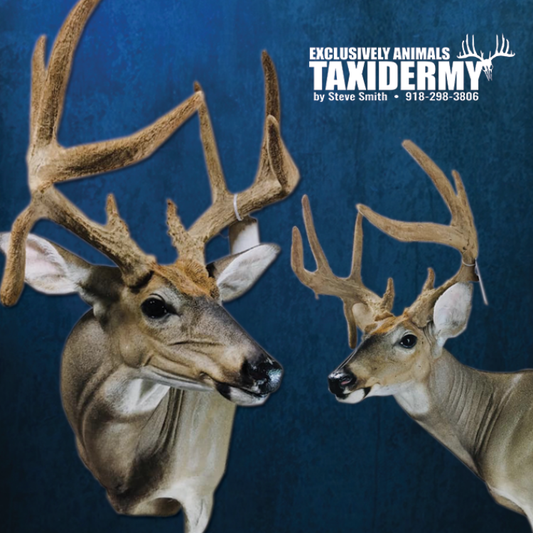 TAXIDERMY BY STEVE SMITH